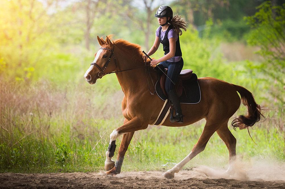 terapia cavallo equitazione