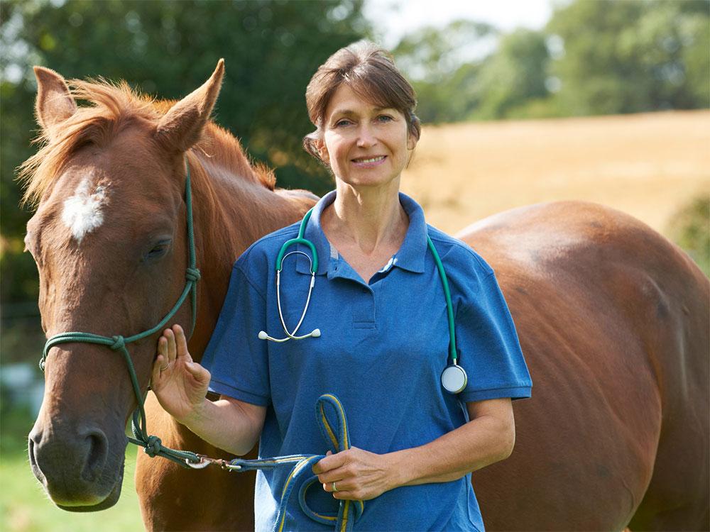 veterinaria terapia senza dolore