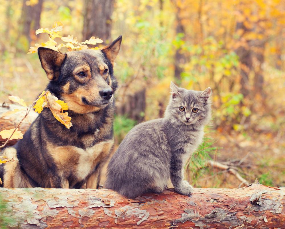 indicazioni_terapeutiche_animali